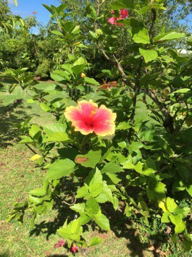 グアムサンキョーガーデン子供におすすめの植物園
